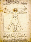 Proportions of human body